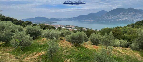 Uliveto vista lago con fabbricato rurale ( TA2 )
